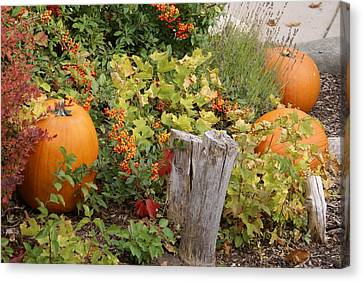 Fall Garden Canvas Print by Cynthia Powell