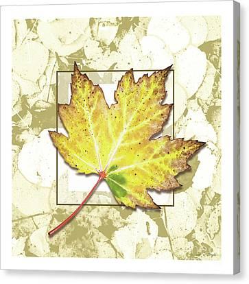 Canvas Print - Fall Gold by Jon Q Wright