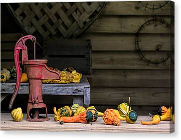 Fall Gourds Canvas Print