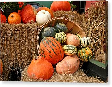 Fall Harvest Canvas Print by Frank Russell