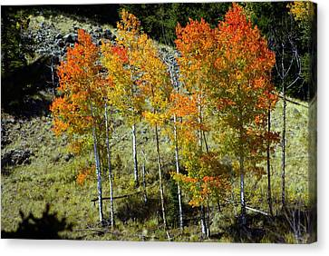 Fall In Colorado Canvas Print by Marty Koch