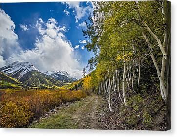 Fall In Colorado Canvas Print