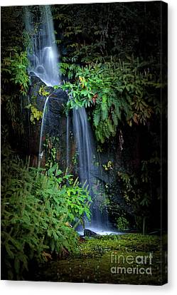 Fall In Eden Canvas Print by Carlos Caetano