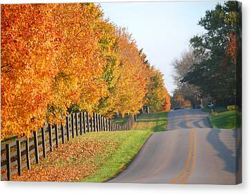 Canvas Print featuring the photograph Fall In Horse Farm Country by Sumoflam Photography