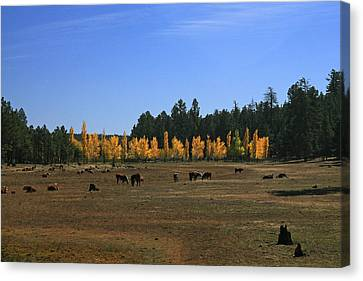 Fall In Line Canvas Print
