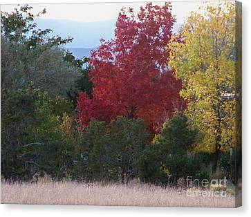 Fall In Santa Fe Canvas Print by Brian  Commerford