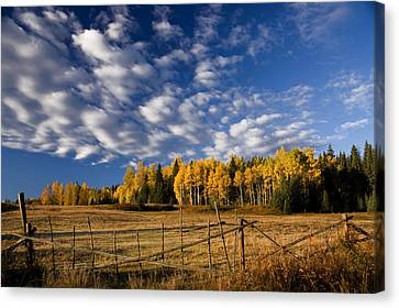 Fall In The Cariboo Canvas Print by Detlef Klahm