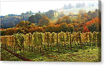 Fall In The Red Hills Of Dundee Canvas Print by Margaret Hood