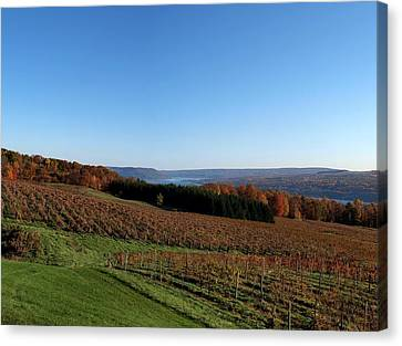 Keuka Lake Canvas Print - Fall In The Vineyards by Joshua House