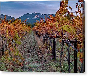 Fall In Wine Country Canvas Print by Bill Gallagher