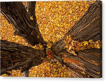Fall Canvas Print by James BO  Insogna