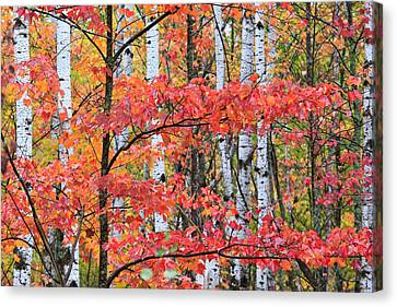 Fall Layers Canvas Print by Adam Pender