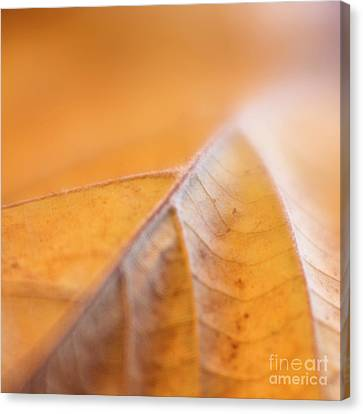 Canvas Print featuring the photograph Fall Leaf by Elena Nosyreva