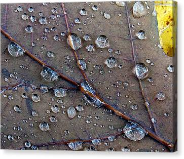 Fall Leaf Canvas Print by Juergen Roth