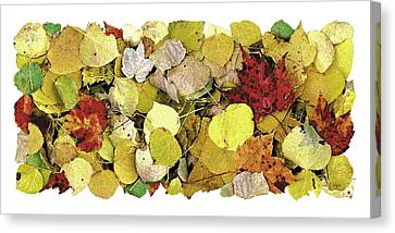 Fall Leaf Vignette Canvas Print by JQ Licensing