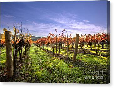 Fall Leaves At The Vineyard Canvas Print by Jon Neidert