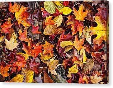 Fallen Leaf Canvas Print - Fall Leaves On Forest Floor by Elena Elisseeva