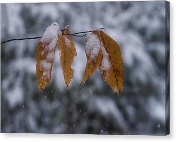 Fall Leaves In Snow Canvas Print by Steven Ralser
