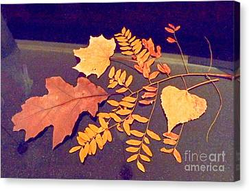 Fall Leaves On Granite Counter Canvas Print by Annie Gibbons