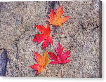 Fall Leaves On Rock Canvas Print