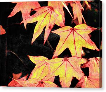 Fall Leaves Canvas Print by Robert Ball