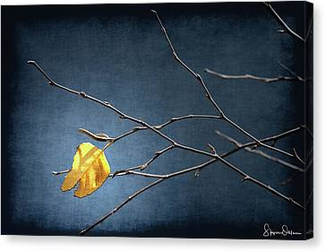Bare Trees Canvas Print - Fall Leaves Study 2 - Last Leaf - Signed Limited Edition by Steve Ohlsen