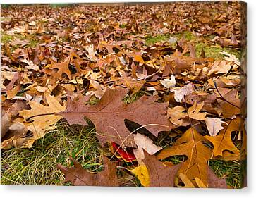 Canvas Print featuring the photograph Fall by Lora Lee Chapman