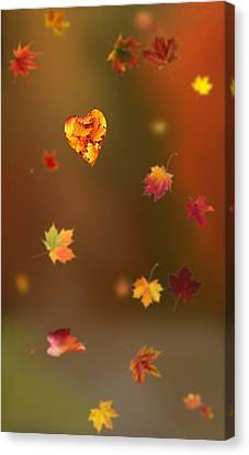 Park Scene Canvas Print - Fall Love by Art Spectrum