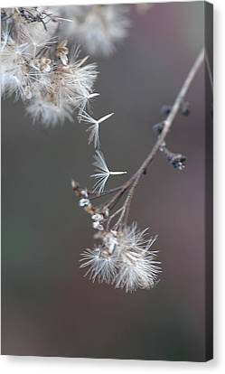 Canvas Print featuring the photograph Fall - Macro by Jeff Burgess