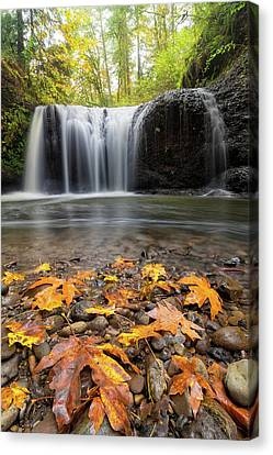 Canvas Print - Fall Maple Leaves At Hidden Falls by David Gn