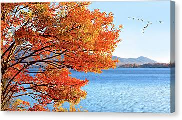 Fall Maple Tree Graces Smith Mountain Lake, Va Canvas Print by The American Shutterbug Society