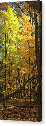 Fall Maples- Uw Arboretum  - Madison - Wisconsin Canvas Print by Steven Ralser