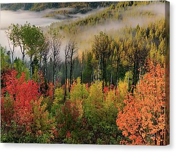 Fall Morning Canvas Print by Leland D Howard