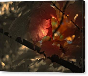 Fall Or Not Canvas Print