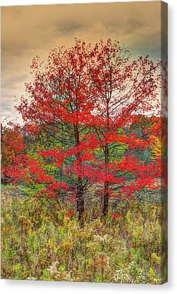 Fall Painting Canvas Print by Skip Tribby