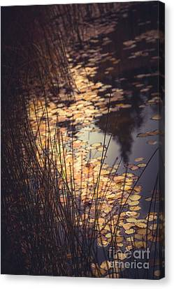 Canvas Print featuring the photograph Fall Pond by The Forests Edge Photography - Diane Sandoval