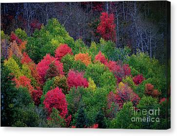 Fall Poppers Canvas Print