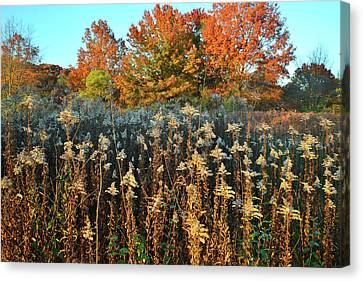 Canvas Print featuring the photograph Fall Prairie In Moraine Hills by Ray Mathis