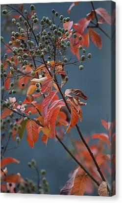 Fall Canvas Print by Rachelle Johnston
