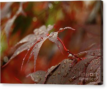 Fall Rain Canvas Print