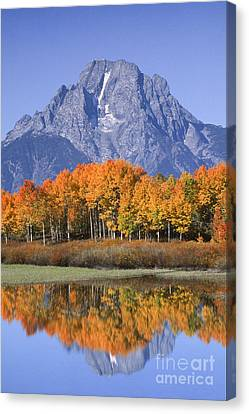 Fall Reflection At Oxbow Bend Canvas Print by Sandra Bronstein