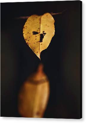 Canvas Print featuring the photograph Fall Reflections by Eduard Moldoveanu