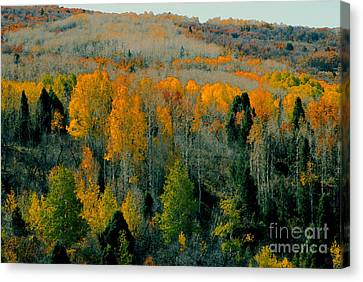 Fall Ridge Canvas Print by David Lee Thompson