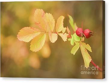 Fall Rose Hips Canvas Print by Wendy Elliott