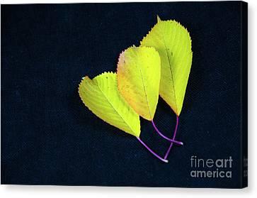 Canvas Print featuring the photograph Fall Season Colors by Kennerth and Birgitta Kullman