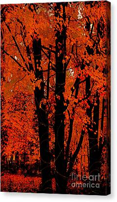 Fall Splendor, Firey Orange Fall Leaves Canvas Print by Tina Lavoie