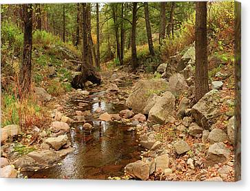 Fall Stream And Rocks Canvas Print by Roena King