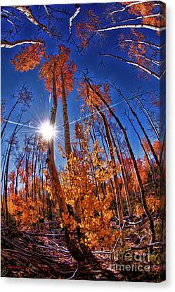 Fall Sun And Trees Canvas Print by Blake Richards