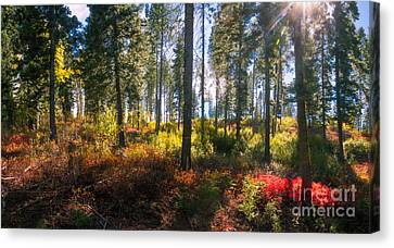 Fall Sun Glow II Canvas Print by Robert Bales