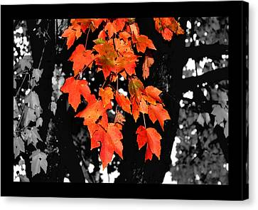 Fall Tree Canvas Print by Karen Scovill